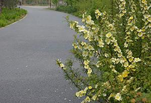 铜仁沥青彩色路面